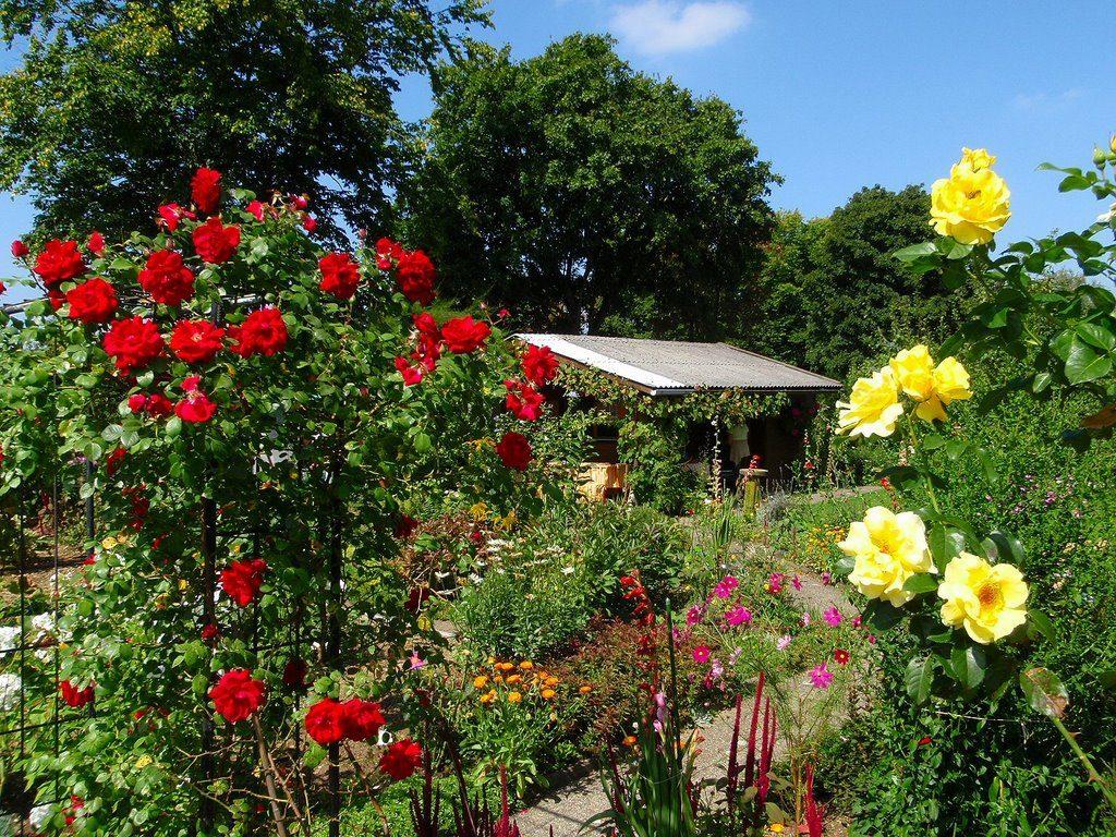 Taman-Mawar
